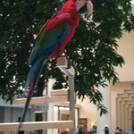 Parrot who has been at the hotel since it was a baby