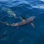 Shark topside