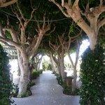 Den hemmelige hagen