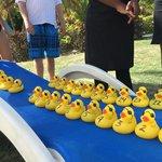 Duck Race! Duck #31 won!!