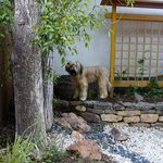 Dog friendly - looking for lizards in our private courtyard