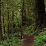 Clatsop Trail, part of Oregon Coastal Trail system