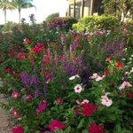 Gorgeous botanical gardens.