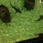 sharks beneath creperia