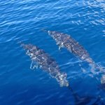 Dr. Ian Poole's Dolphin & Whale watching