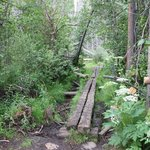 One of the bridges on the Lily Pad Trail.