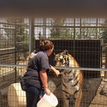 This tiger LOVED it when she would talk to him. She knew about all the animals, their personalit