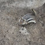 Chipmunk hanging with us during snack time!