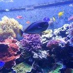 Aquario lindo e maravilhoso