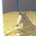 A newborn Clyde