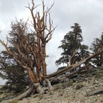 Discovery Trail, Ancient Bristlecone Pine Forest