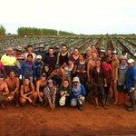 The farming work in Bundaberg