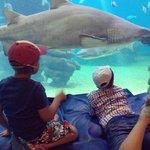Дети рассматривают акул в большом аквариуме.