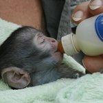 Bambelela Wildlife Care&Vervet Monkey Rehabilitation Farm