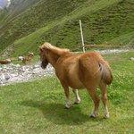 pony at the Cheseira da Fedaria