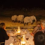 Dinner with the Elephants