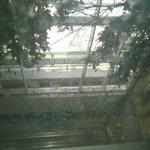 brudne szyby w windach i suche  liście z drzew