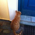 gatto davanti alla porta della camera