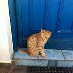 gatto davanti all'ingresso di casa