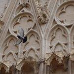 Facade - Gargoyle & Pigeon