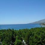 zöld erdő, kék tenger