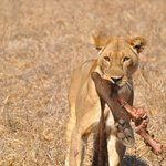 Lion's share !