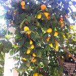 Lunch under ett mandarinträd