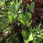 Surprising plant close to wild beach
