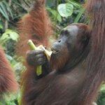 Quanto son buone le banane!
