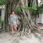 Huge and ancient tree