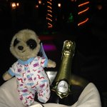 Oleg Mr Meerkat enjoying his Champagne