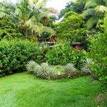 Garden near pool