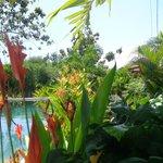 Piscine et jardin bien fleuri
