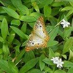 Plenty of butterflies