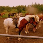 The Horses (1)