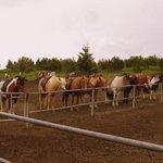 The Horses (2)