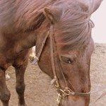 My Horse, Rapp (Raven)