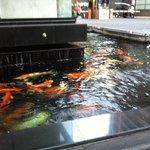 fish feeding at the Aeta's hotel