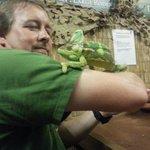Pascal the chameleon .
