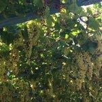 И еще...виноград