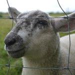 The lamb I fed :-)
