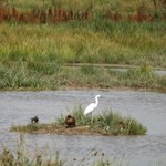 Little Egret and friends
