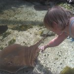 Petting a stingray