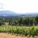Averill Creek Vineyard