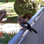 Un uccello ghiandaia