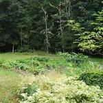 Another garden
