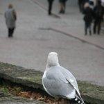 чайка на площади Виру