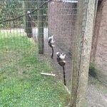 Small Monkeys