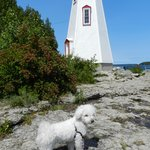 My Dog at the Lighthouse