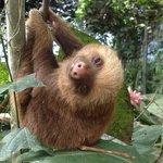 Baby Rescue Sloth